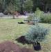 В Нижнем Новгороде в сквере имени Чкалова посадили аллею барбарисов