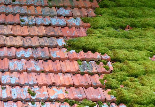 Мох на крыше – что делать?